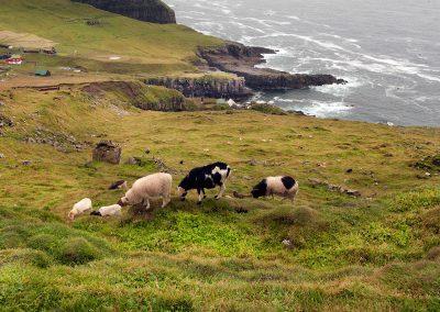 Mykines - rejser til Færøerne