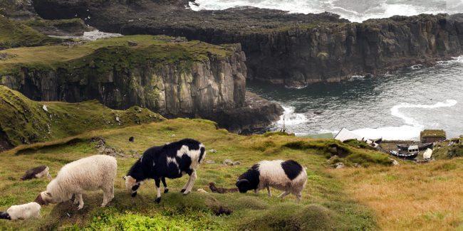 Grupperejse til Færøerne med FÆRØERNEREJSER