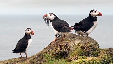 Aktiviteter og dagture på Færøerne