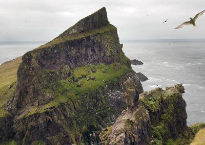 Klippe på Mykines - kør-selv ferie og grupperejser på Færøerne