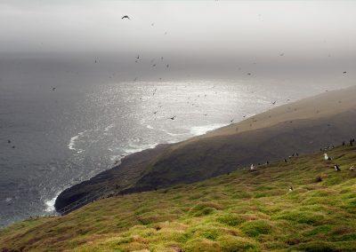 Fugleliv på Mykines - Færøerne
