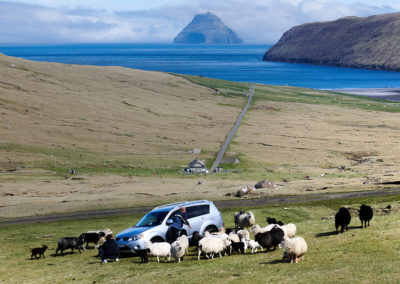 En lille fåresamling og Litli Dimun i baggrunden på kør-selv ferie, bilferie og grupperejser med FÆRØERNEREJSER